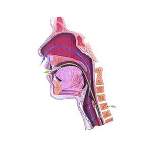 La gastroscopia trans-nasale